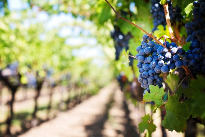 Include a 2 Day Wine-Tour in your itinerary for FREE!