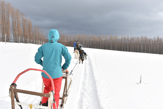 Experience the Best Dog Sledding Japan Has to Offer With Minamifurano Hokkaido Adventure Tours (H.A.T.)!