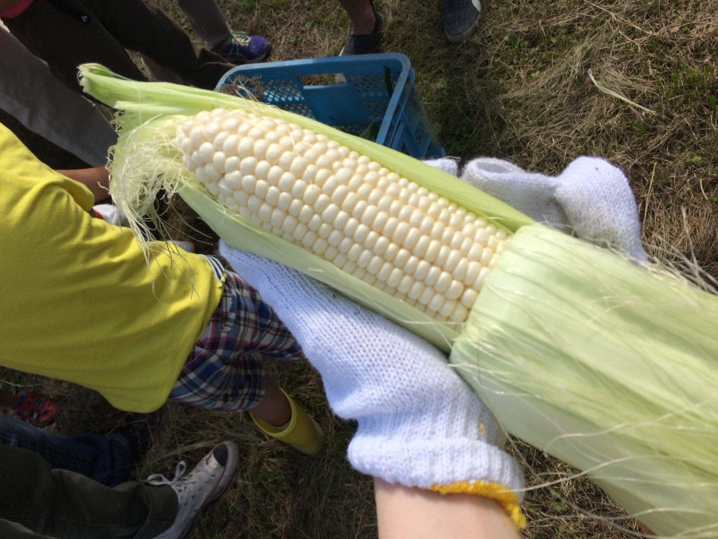 Corn can be white!