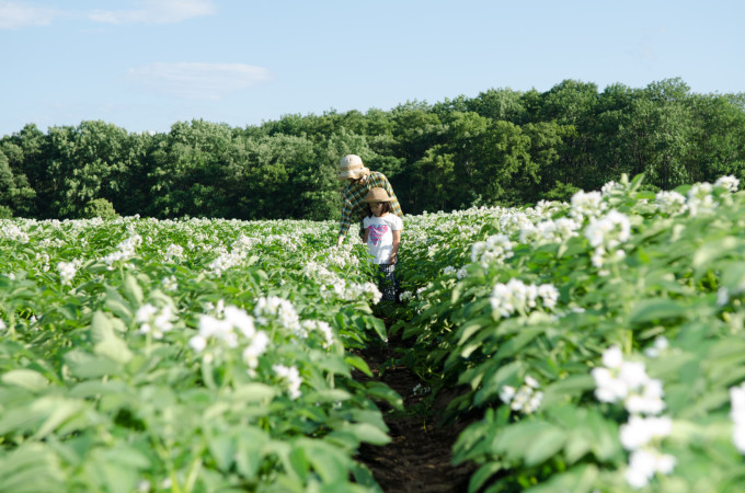 Thanks to Crops in Tokachi! Experience Unforgettable Farm Picnic