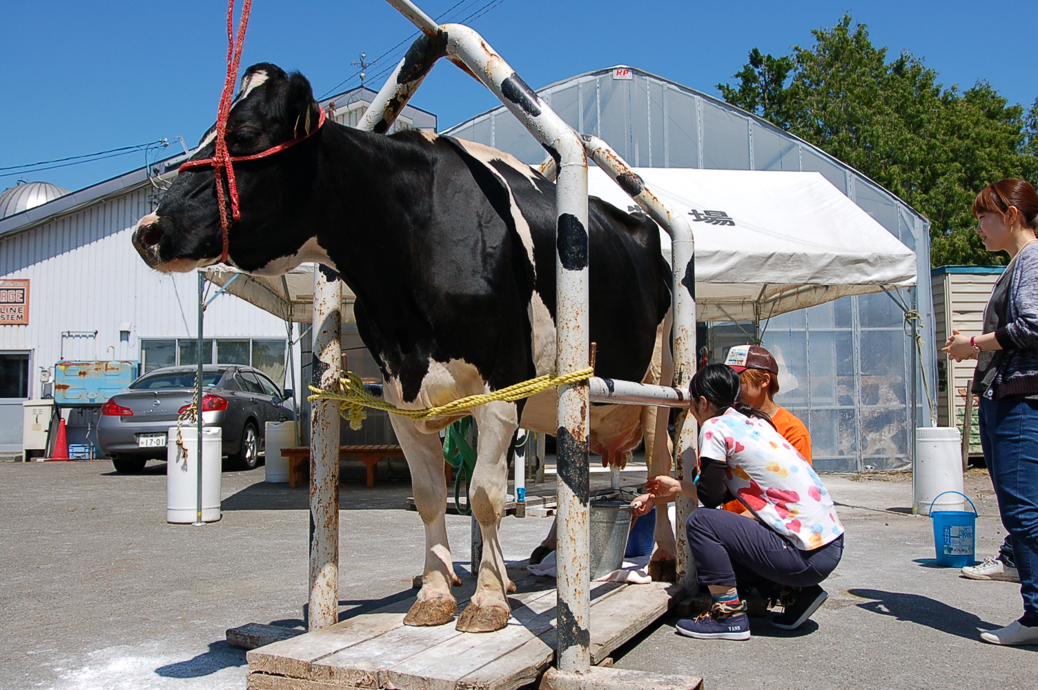 Dairy Farming Experiences at a Farm in Eniwa City [Eniwa]