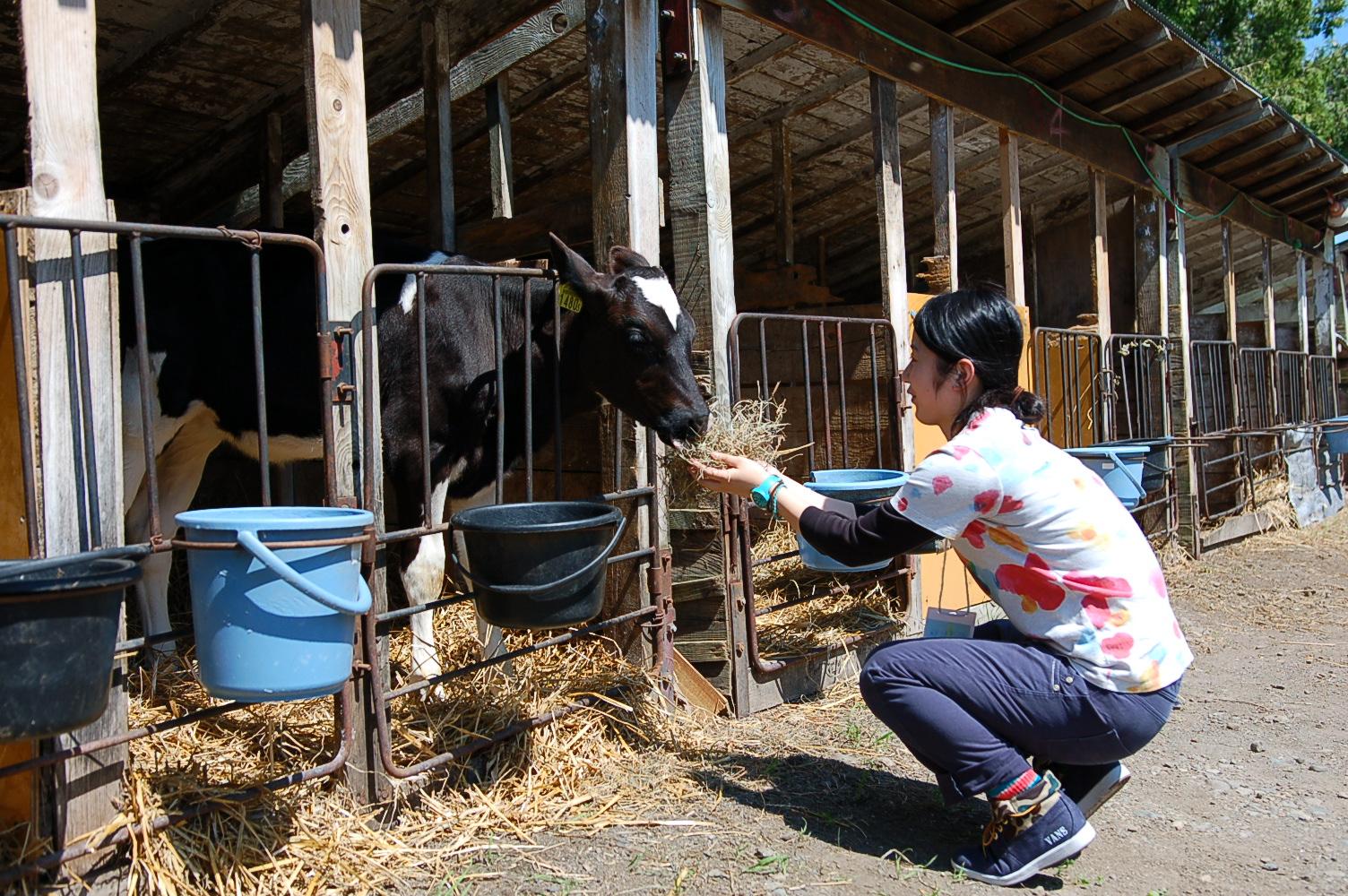 Daily Farm (4)