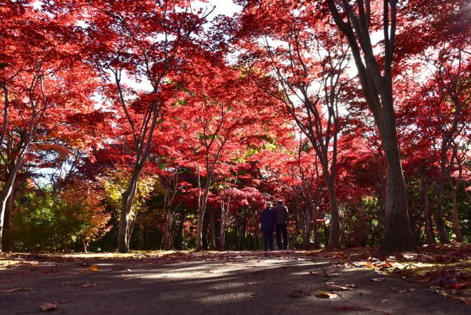 hiraoka jyugei, autumn