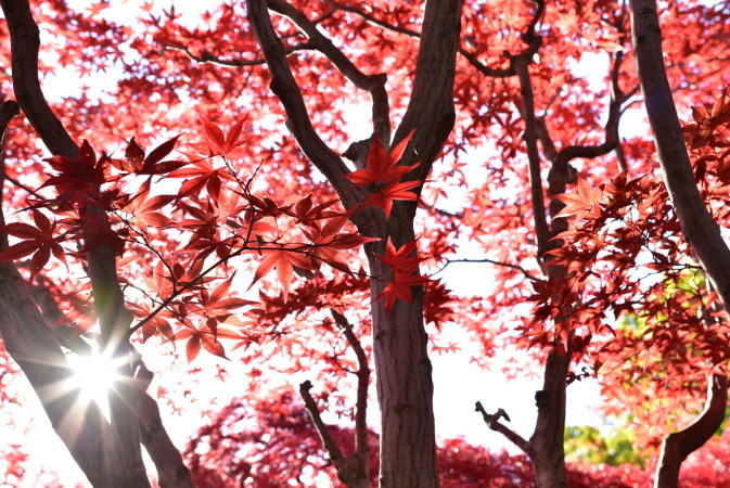 hiraoka jyugei autumn