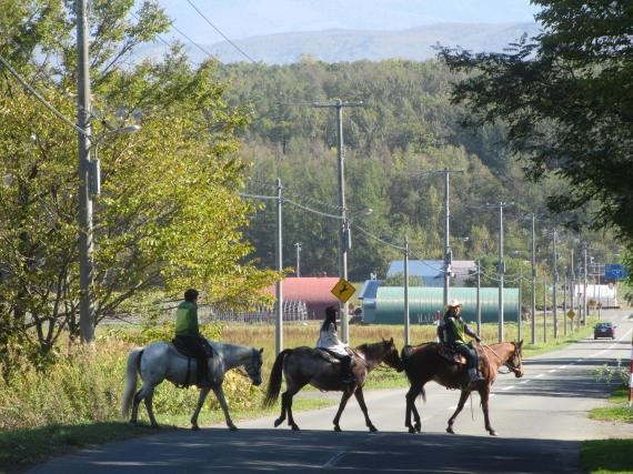 Horseback riding in Furano City! (Furano City)