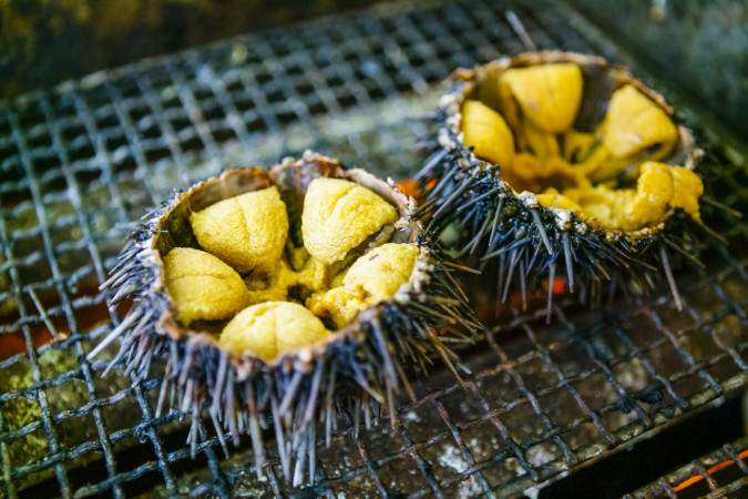 food sea urchin (2)