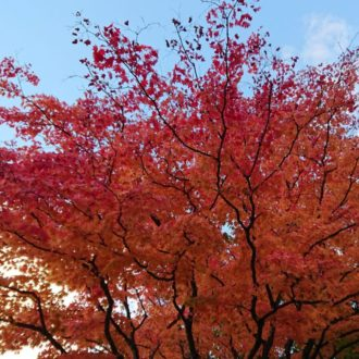 Beautiful Autumn Leaves Trip in Hokkaido